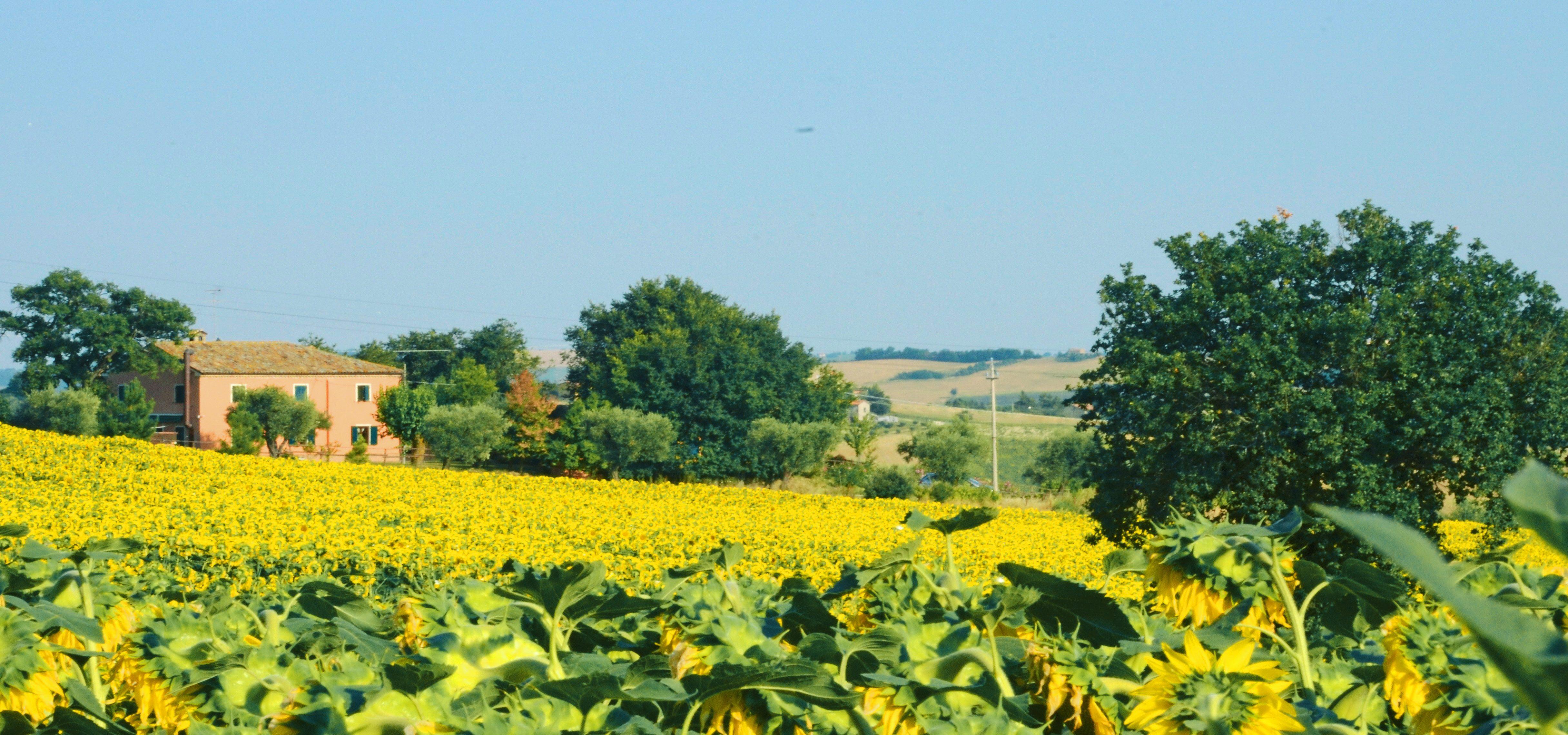 i colori della campagna